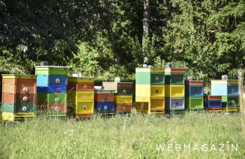 Tatranskí lesníci začali s vlastným chovom včiel vo Vysokých Tatrách