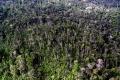 Príroda čelí masovému vyhynutiu - prvému od čias vyhynutia dinosaurov