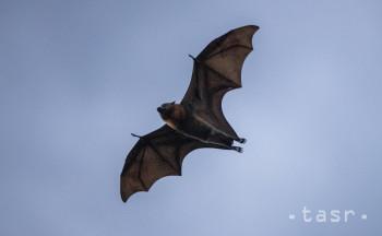 Na Slovensku sa vyskytuje 28 druhov netopierov, ktoré sú chránené