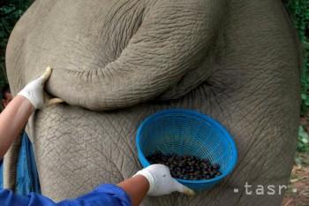 Šálka kávy zo slonieho trusu stojí 50 dolárov