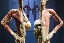 Výstava Body the exhibition