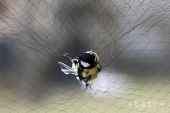 Víkend bude v znamení pozorovania migrujúceho vtáctva