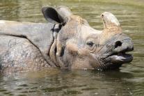 Tipy na víkend: Vinobranie, nosorožce, samba, aj Leto na hradbách