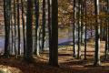 Košický kraj chce z eurofondov realizovať v lesoch enviroprojekt