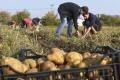 Košice: Útulok v Bernátovciach zbiera zemiaky, pomohli aj študenti