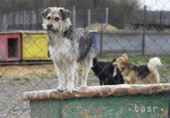 Zvierací ombudsman spustil aplikáciu na adopciu zvierat z útulku