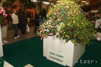 Kvetom Flóry Bratislava je cudzokrajný pestrofarebný lisianthus