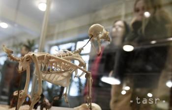 V Botanickej záhrade v Košiciach sme videli unikátne dinosaurie embryo