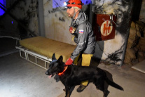 Tréning záchranárskych psov na vyhľadávanie osôb