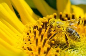 Sedem zvláštnych spôsobov, ako zvládať alergie