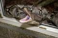 V Rakúsku sa počas víkendu postarali o rozruch hady na úteku