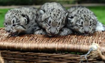 Najkrajšie mláďatá svetových zoologických záhrad tohto leta