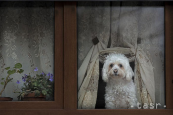 Na snímke psík sleduje ľudí na ulici za oknom v rumunskej metropole Bukurešti 8. decembra 2019. FOTO TASR/AP