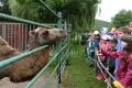 VIDEO: Najmenšia zoo v SR má novinku pre návštevníkov