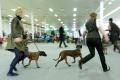 Obe výstavy psov v Nitre ovládol bulmastif Angel's Phoenix