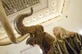 Spoznajte obrovské zvieratá z ľadovej doby v Prírodovednom múzeu SNM