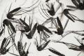 Na Kajmaních ostrovoch nasadia proti vírusu zika modifikované komáre