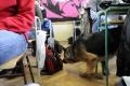 Policajný pes pri preventívnej akcii na škole odhalil drogy