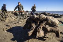 Nález kostry mamuta