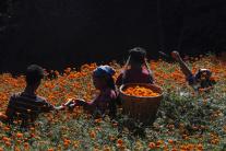 Príprava na hinduistický sviatok Tihar