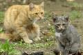 V Bratislave vykastrovali viac ako 1600 pouličných mačiek