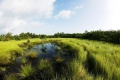 Svet si druhýkrát pripomenie Medzinárodný deň za zachovanie ekosystému