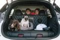 Kúpili by ste do auta výbavu špeciálne pre psa?