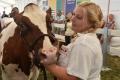 Najkrajším kusom hovädzieho dobytka je kravička Madame