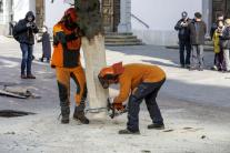 Osádzanie vianočného stromčeka v Bratislave
