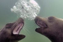 Rozhovory pod vodou