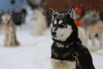 Majstrovstvá Európy v pretekoch psích záprahov