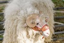 Národná výstava hospodárskych zvierat má svoju Mis