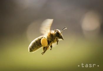 Len jedno bodnutie hmyzu môže narušiť Vaše plány
