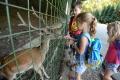 V prímestskom tábore košickej zoo deti spoznávajú zvieratá