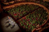 Rastliny milujú operu