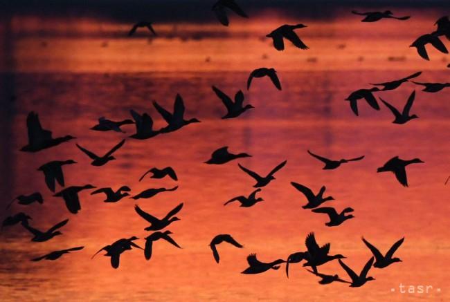 3a1d789edb79 NELETIA ZA TEPLOM  Jesenná migrácia vtáctva vrcholí - 24hod.sk