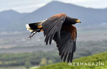 Ornitológ: Medzi prvými hniezdiacimi vtákmi sú niektoré dravce i ďatle