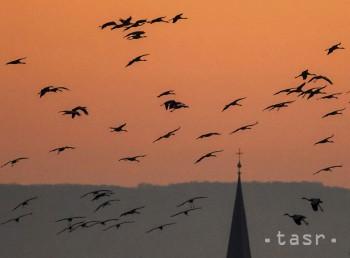 Zo Slovenska odlieta do teplejších krajín viac ako 150 druhov vtákov