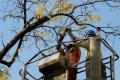 Niektoré stromy na bratislavskom Dvořákovom nábreží čakajú orezy