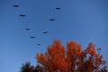 Na Senianskych rybníkoch spozorovali ornitológovia 61 vtáčích druhov