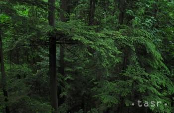 Gabon bol ocenený za ochranu tropických lesov na svojom území