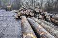 Tržby v drevospracujúcom priemysle vzrástli medziročne o 2,7 percenta