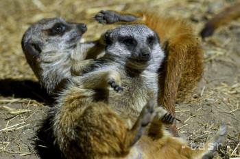 Stropkovský Park zvierat postupne mení zameranie