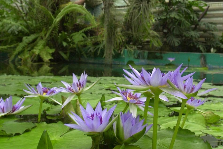 botanická záhrada - Fotodenník - SkolskyServis.TERAZ.sk ce1ae1bb443
