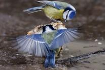 veľké ľudské vtáky
