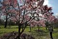 V Bratislave otvorili botanickú záhradu i zoo, sprístupnia aj múzeum