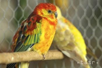 V kontaktnej ZOO pri Sĺňave môžu deti vtáky kŕmiť vo voliérach