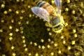 Zdravotný stav slovenských včiel negatívne ovplyvňuje nedostatok peľu