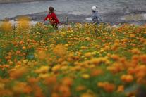 Kvety nechtíka