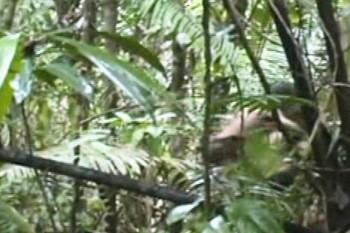 Brazília zverejnila videozáznam s izolovaným amazonským kmeňom